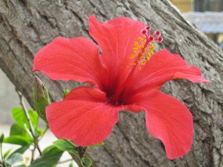 Descripción de la flor